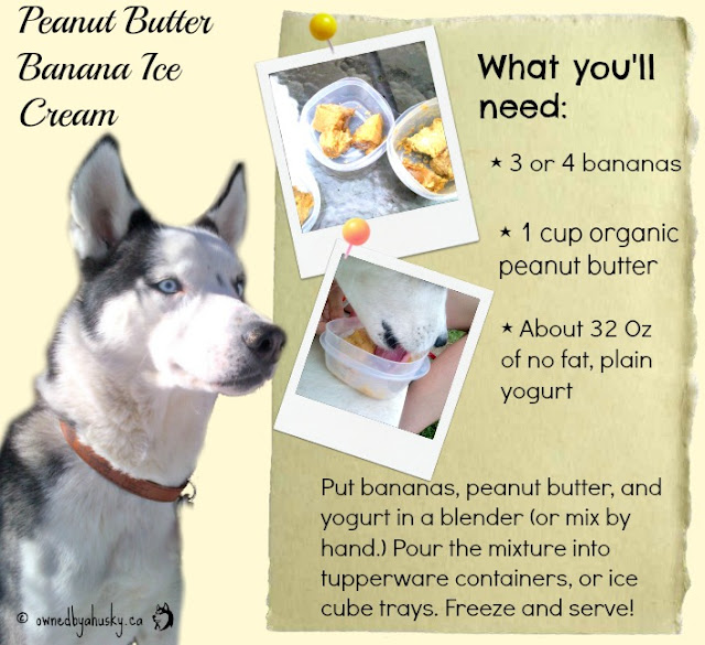 Peanut Butter Banana Ice Cream For Dogs