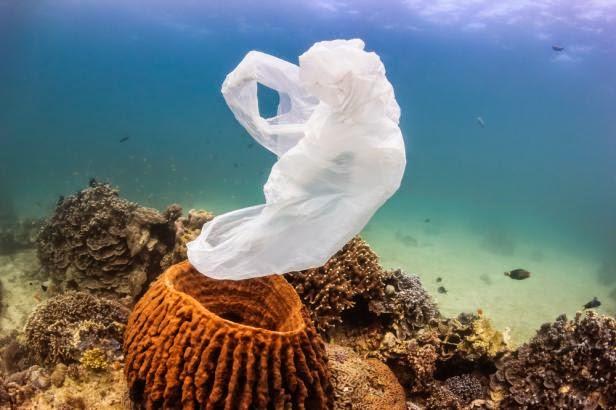 انتشار النفايات البلاستيكية في محيطات العالم