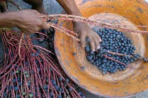 http://ediblefoods.com.au/tag/acai/