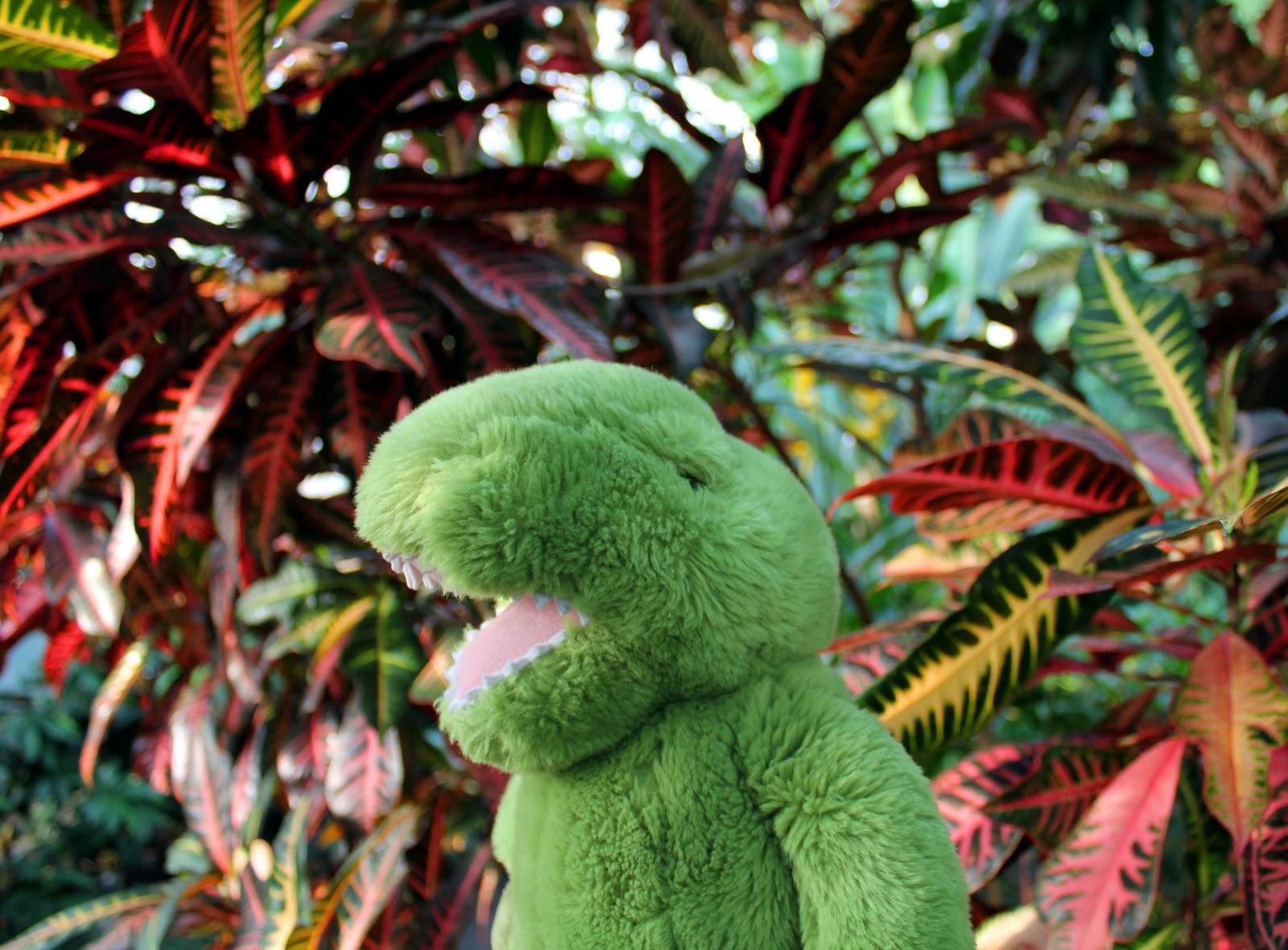 amazon rainforest plants collage. tropical rainforest plants list amazon collage
