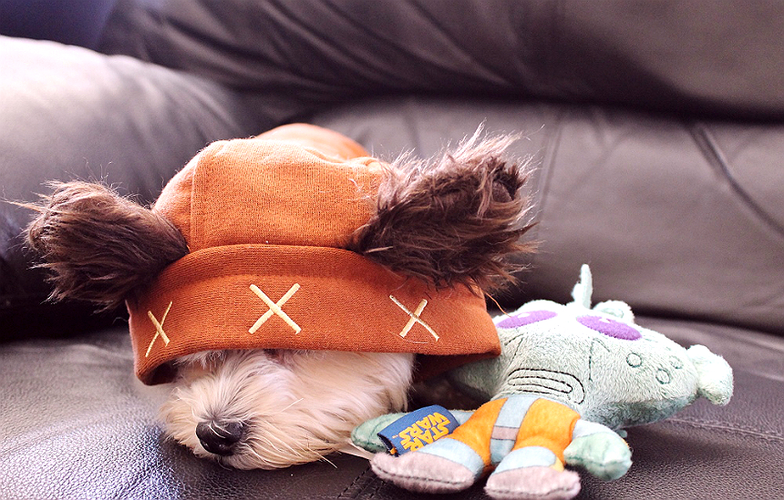 Ewok Puppy Greedo