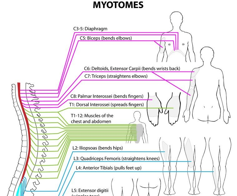 Special test for dermatomes and myotomes