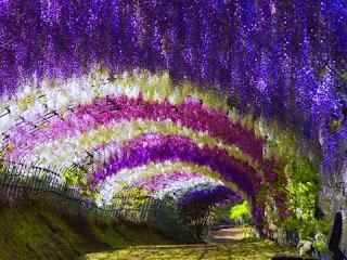 cueva de flores  Paisajes de flores