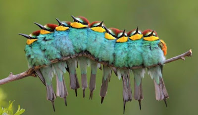 Caterpillar in Birds Illusion