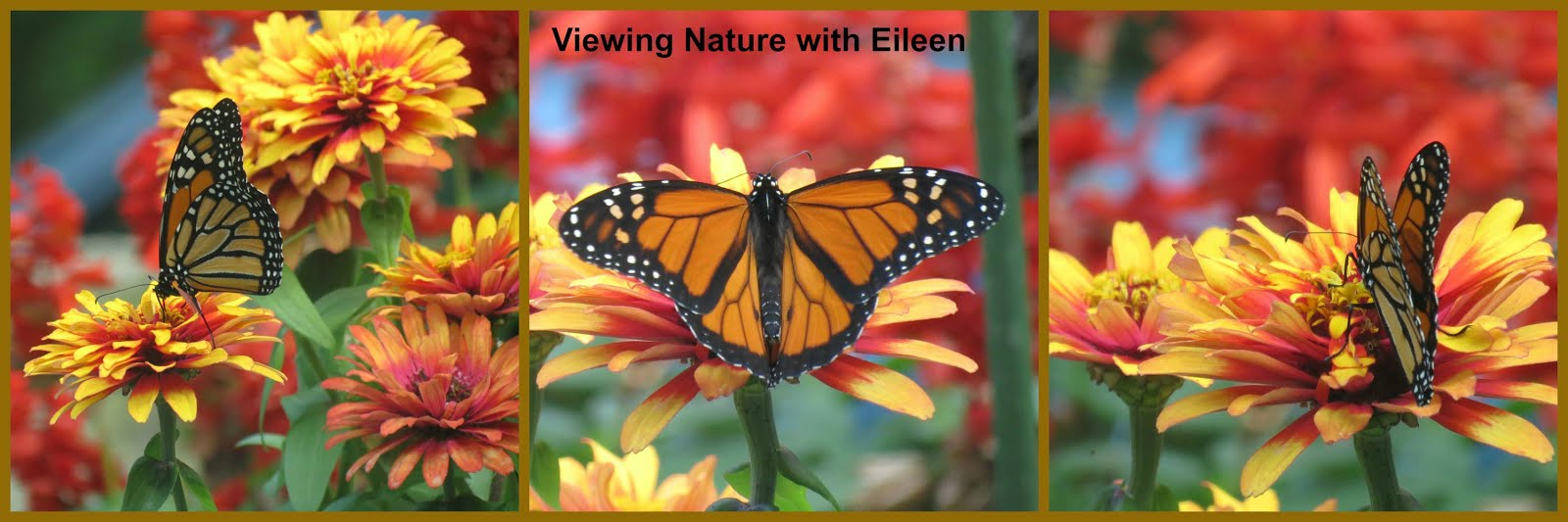 Viewing nature with Eileen