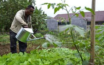 Sejarah Pertanian Organik Raja Organik
