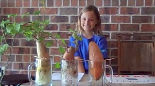 This kid explains in 2 minutes why organic is better!