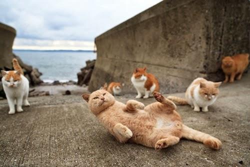 Tashirojima, Jepun Terkenal Dengan Nama Pulau Kucing