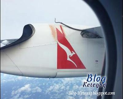 Ular tumpang naik pesawat