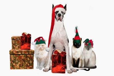 La asociaci�n perruna pide que ning�n animal quede sin su regalo