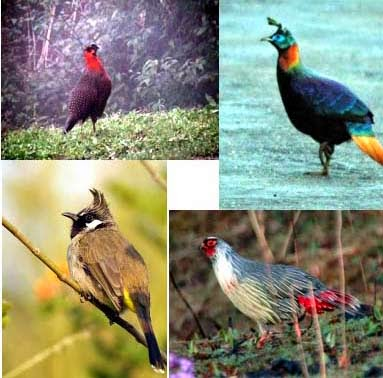 Bird Watching in Mirik, another attraction for tourism