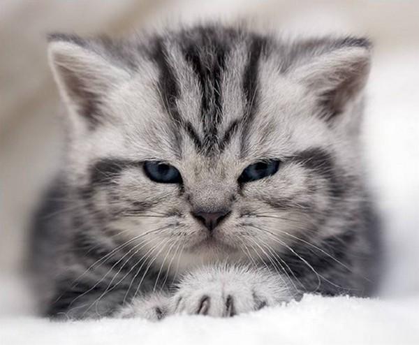 Котята (30 фото)