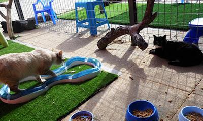 Sân chơi của mèo trong SPA