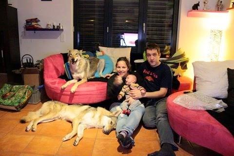 Family Tratto dal Lupo