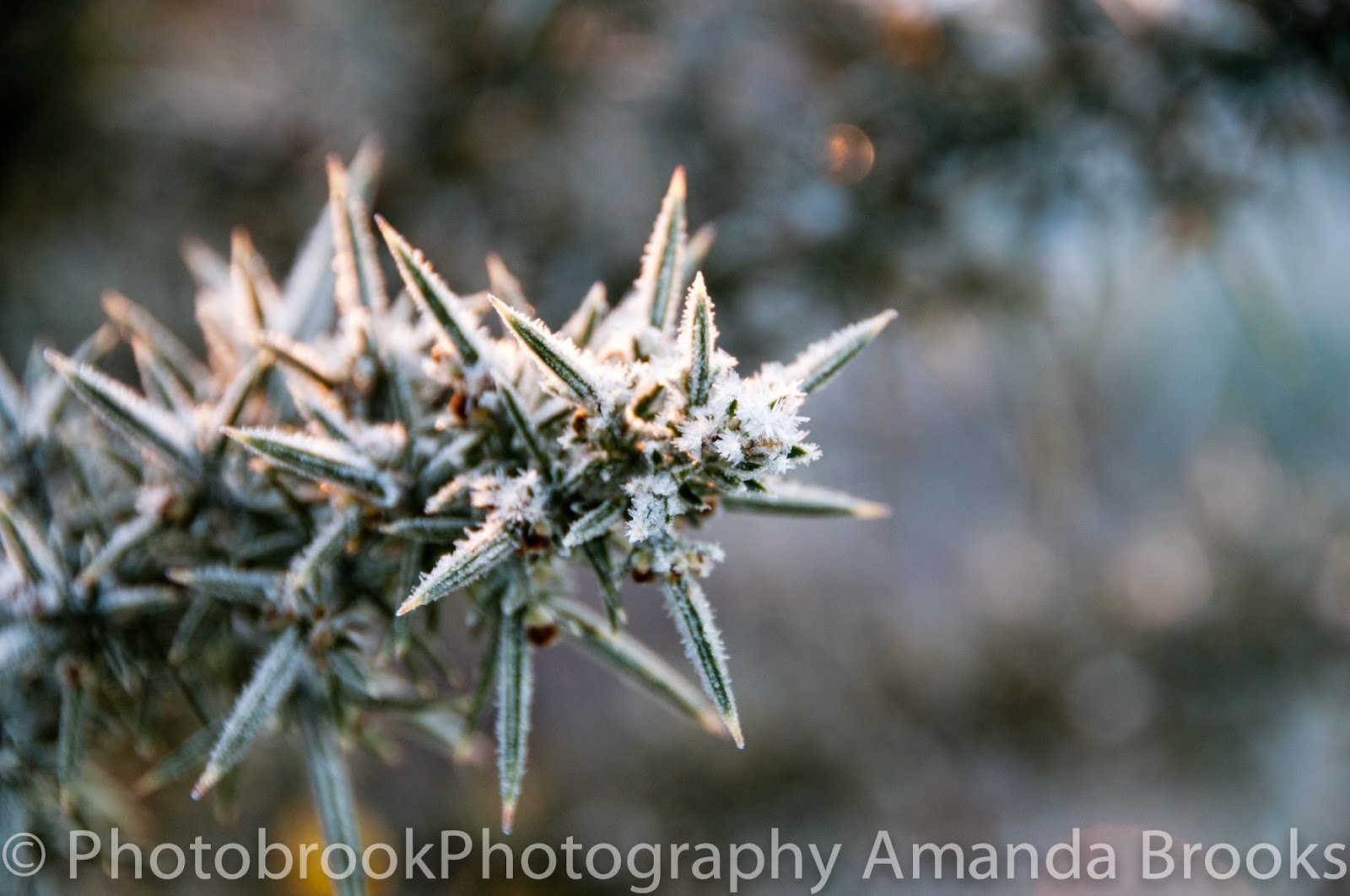 frosty plants in cornwall