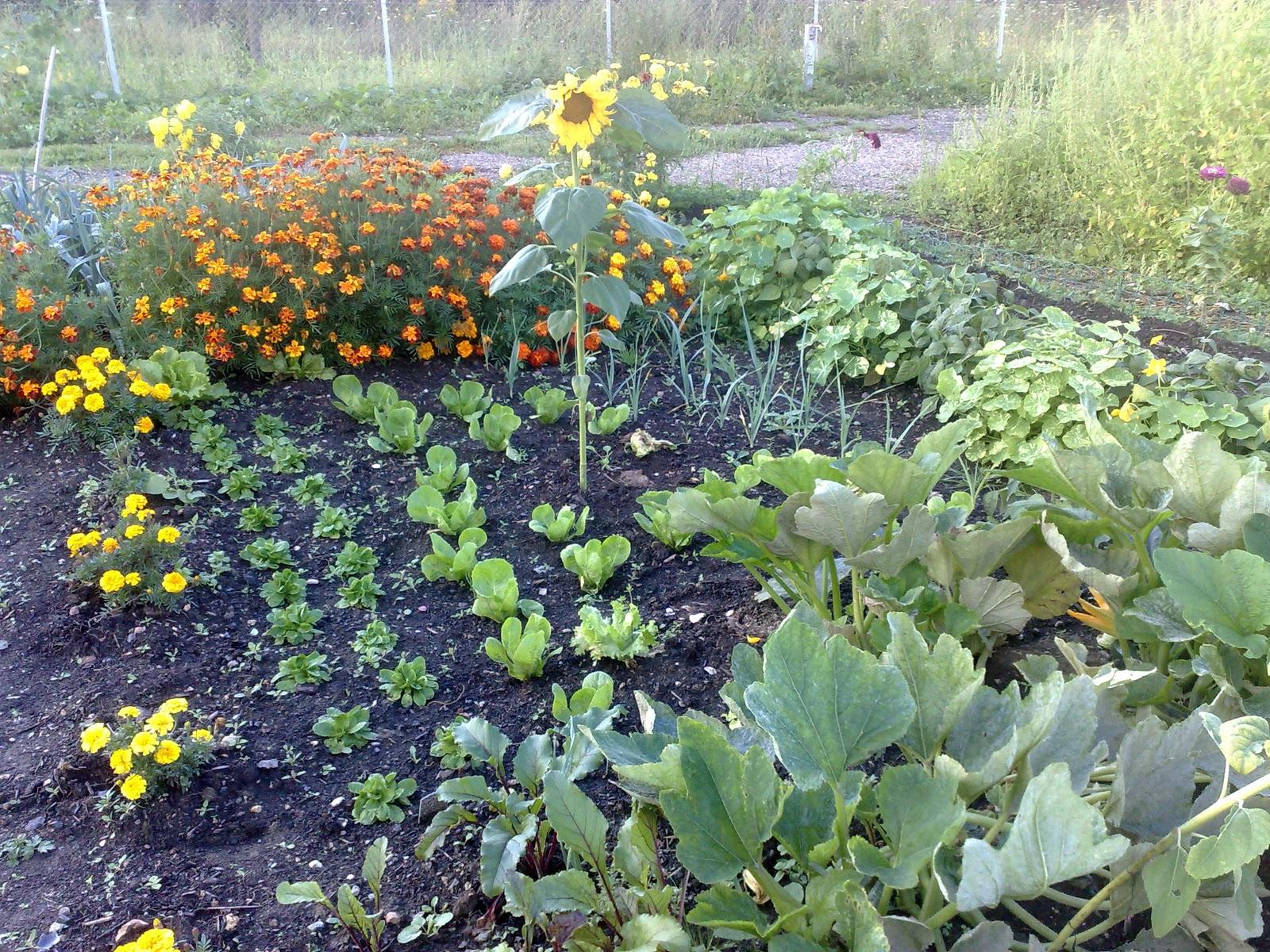 Les jardins familiaux de louveciennes octobre 2011 for Jardin familiaux
