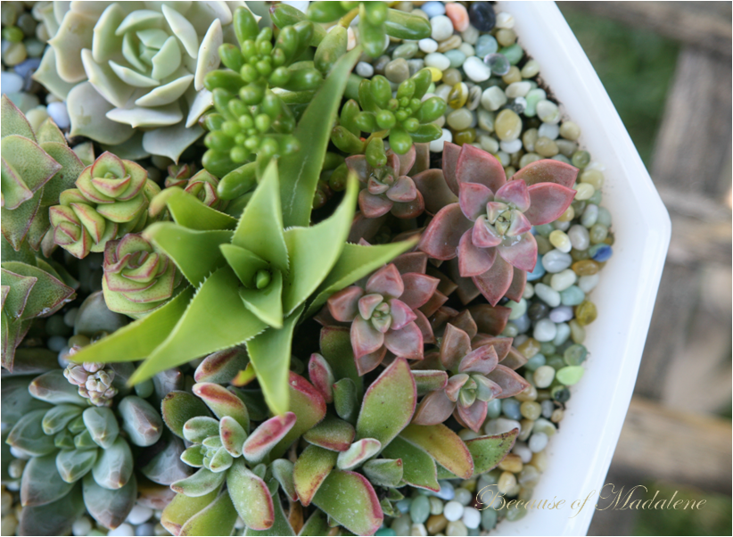 Because of Madalene DIY Succulent Garden