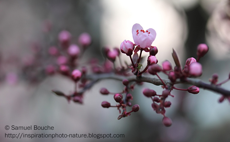 Inspiration photographique le blog nature les arbres - Arbre fleur mauve printemps ...