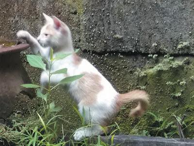 Foto-Foto Anak Kucing Lucu di Luar Jendela Kamar Kost Gue 04