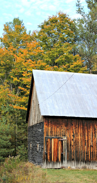 Fall foliage by old barn in Schroon Lake, NY- www.goldenboysandme.com