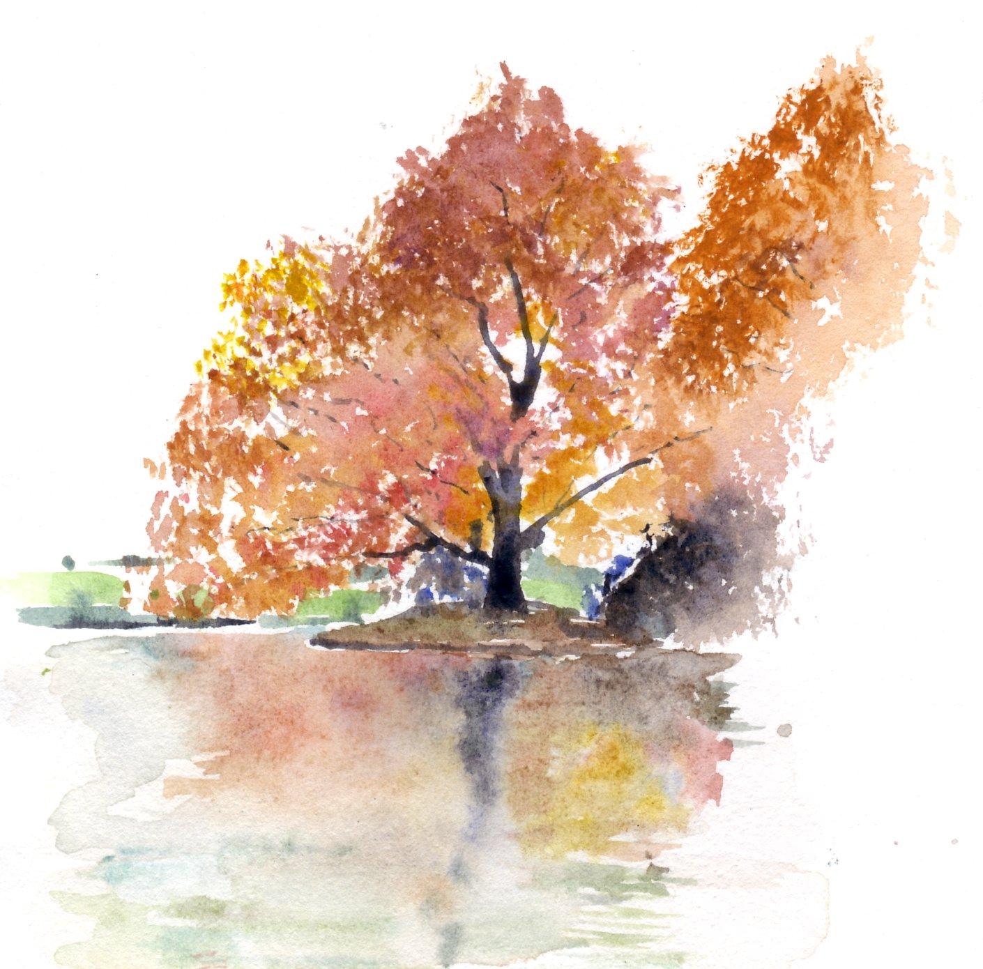 Conosciuto acquerelli di Roberto Vallarino: Albero riflesso nell'acqua VK04