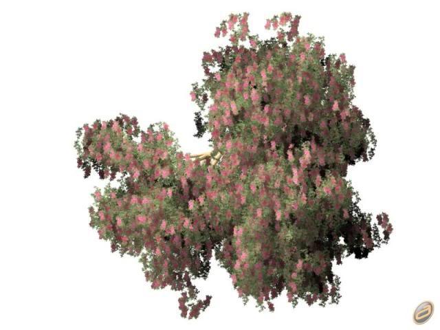 Arboles autocad photoshop for Arboles para plantar en invierno