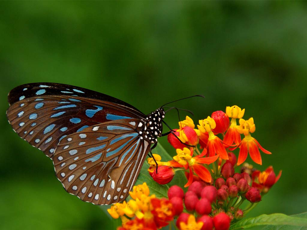 beautiful natural scenery a butterfly perched on a flower