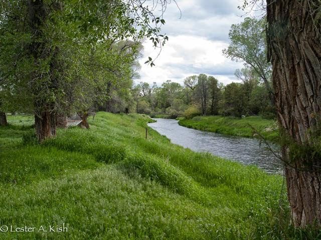 Streamside hammock, DePuy Spring Creek, Montana