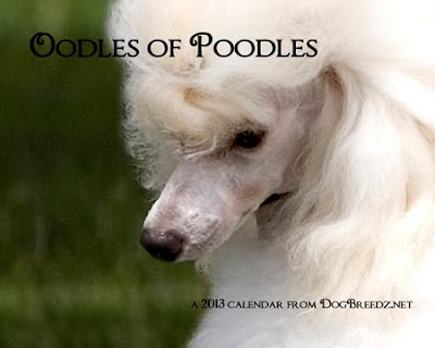 2013 Oodles of Poodles wall calendar from DogBreedz.net