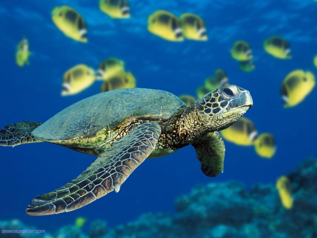 Especies De Tortugas En Peligro De Extinsi  N
