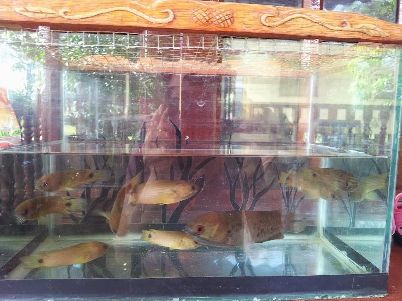 Kepercayaan Mengenai Ikan Puyu