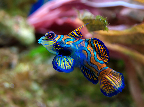Tropical freshwater aquarium fish pictures just for sharing for Cool fresh water fish