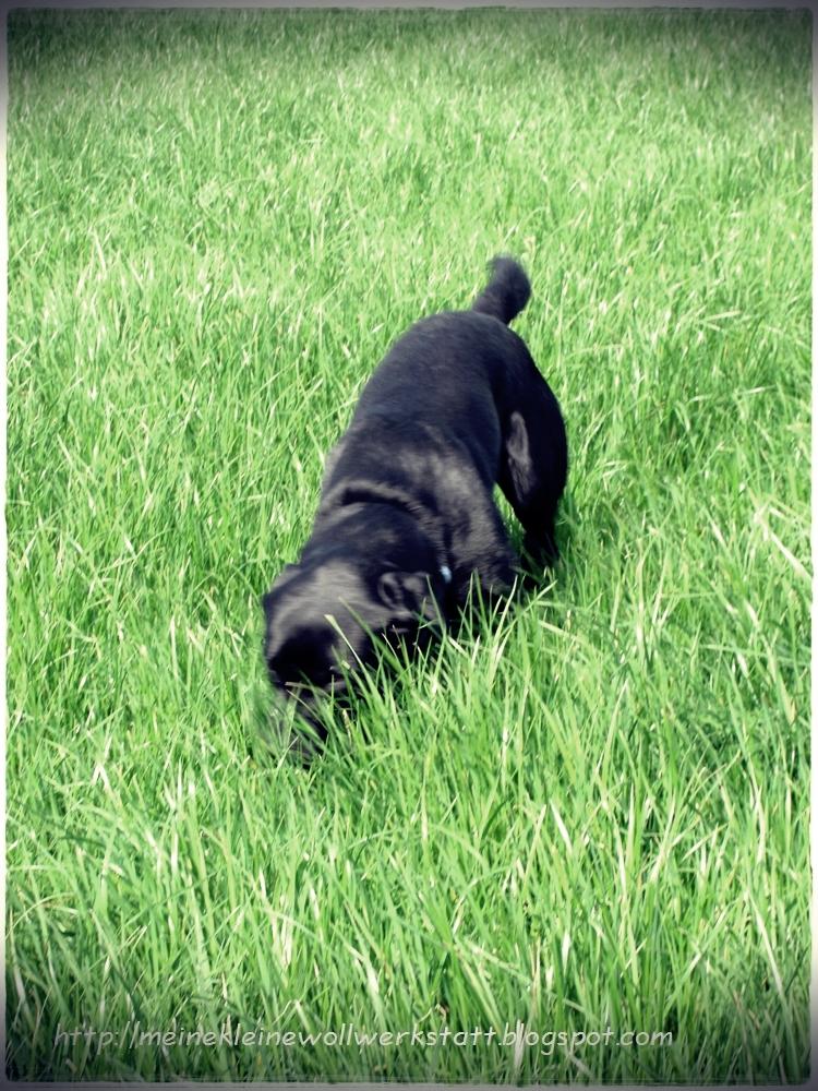 Hund Leckt Frau Die Votze - Fireball