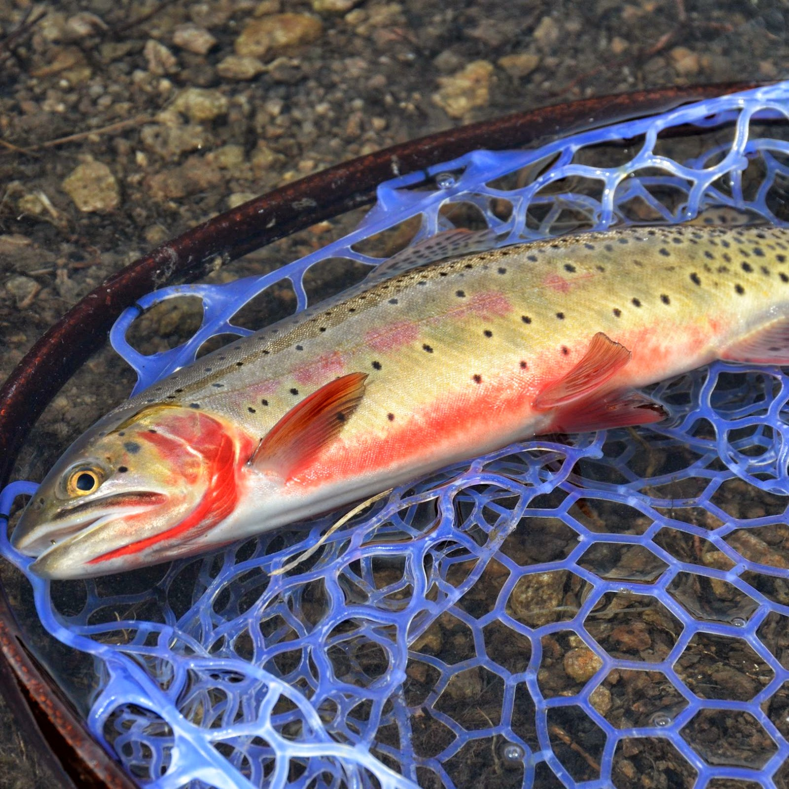 Dry fly fishing with a nymphing rod fly fish food fly for Rods fish food