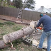 Κόβοντας ένα μαγικό δέντρο! (Βίντεο)