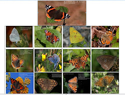 A4 Butterfly calender 2013 by Martin Goodey for only 12.00 inc P&P
