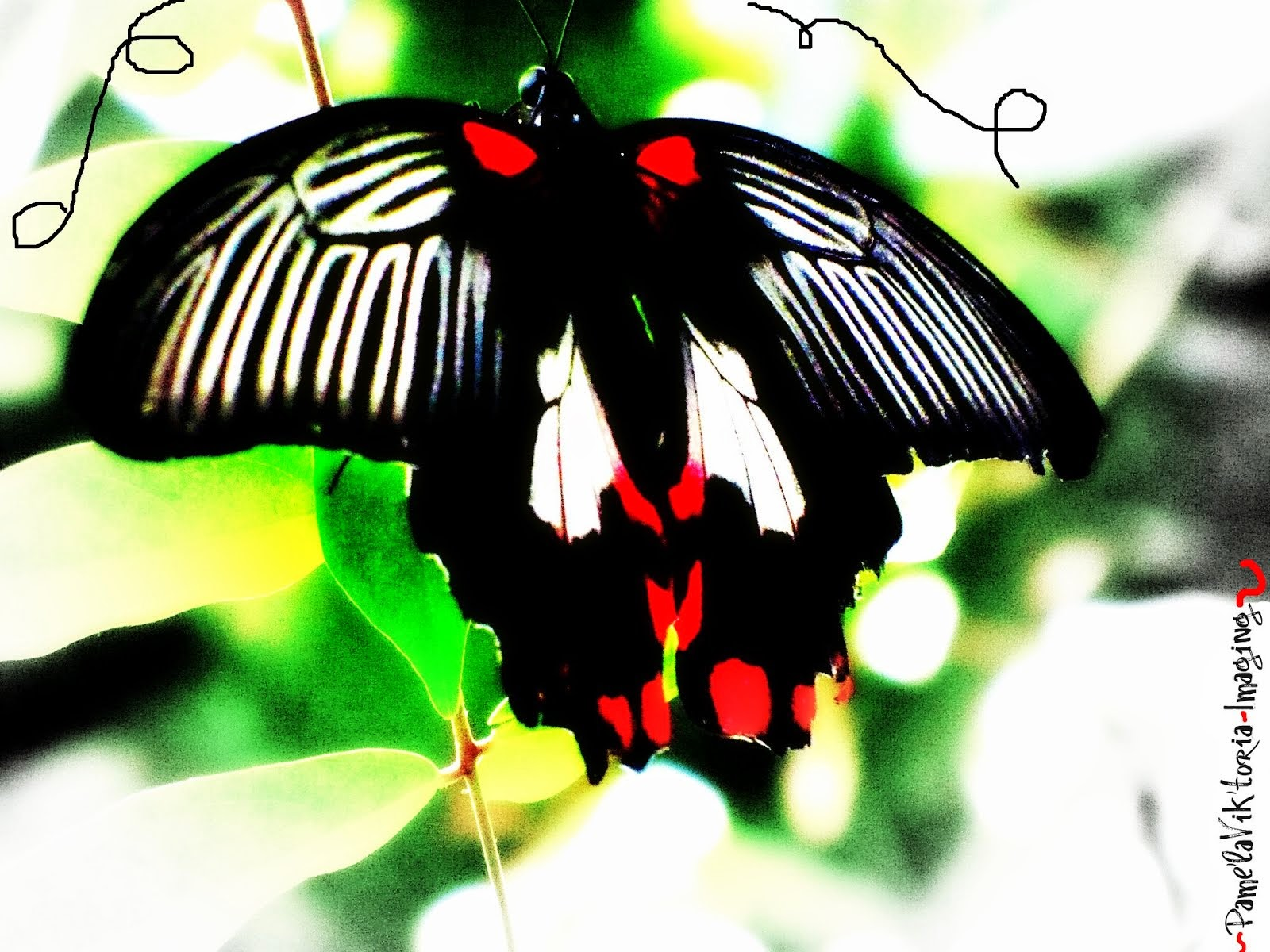 Red & Black Striped Butterfly