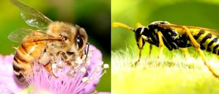 Ape e vespa foto