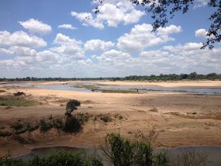 Kamp Letaba is ook het kamp met een fantastisch terras achter het restaurant, waar het heerlijk koffie drinken is. Normaliter zijn hier de oevers redelijk begroeid. Nu hebben de watermassa's hier enorme zand verplaatsingen veroorzaakt die een heel strand opgeworpen hebben.