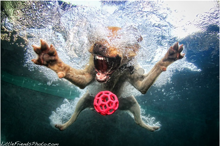 Art-Sci: Funny Underwater Photographs of Dogs Swimming