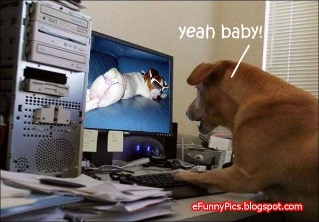Dog surfs the Internet