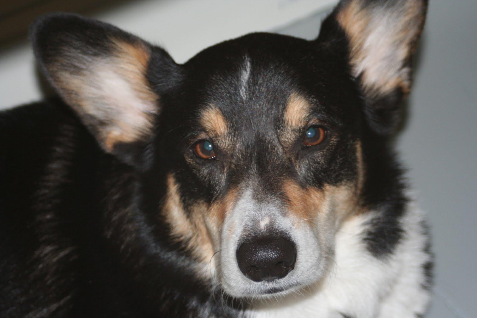 Antiseptic Antifungal Spray for Dogs Cats   Amazoncom