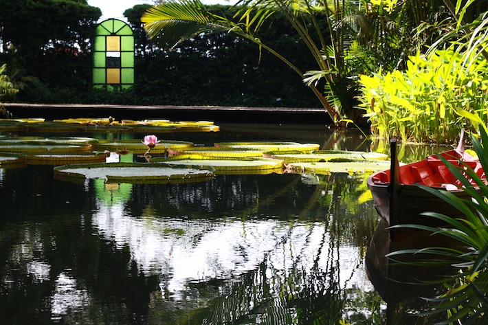 pond at penang tropical spice garden