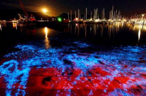 Fenomena bioluminesensi