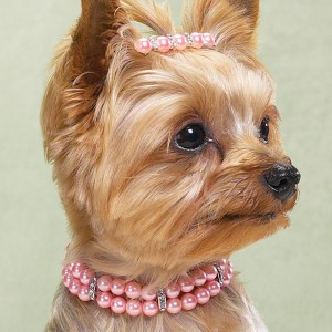 The most charming dogs in the world!: Jewelry for dogs!