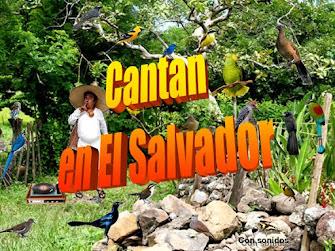 Aves muy conocidas en El Salvador:
