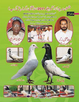 K Magazine Pigeon Kabootar In Dubai Rela...