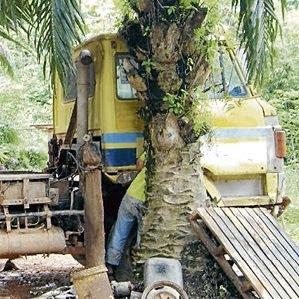 Mati Tersepit Celah Pokok Kelapa Sawit