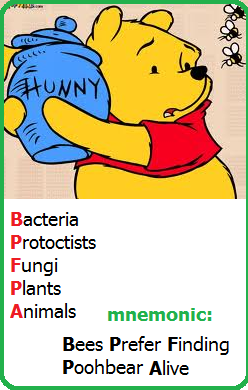 external image mnemonic.png