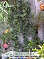Kenali tanaman merambat untuk tembok rumah